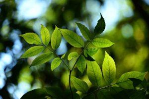 tree, leaves, foliage